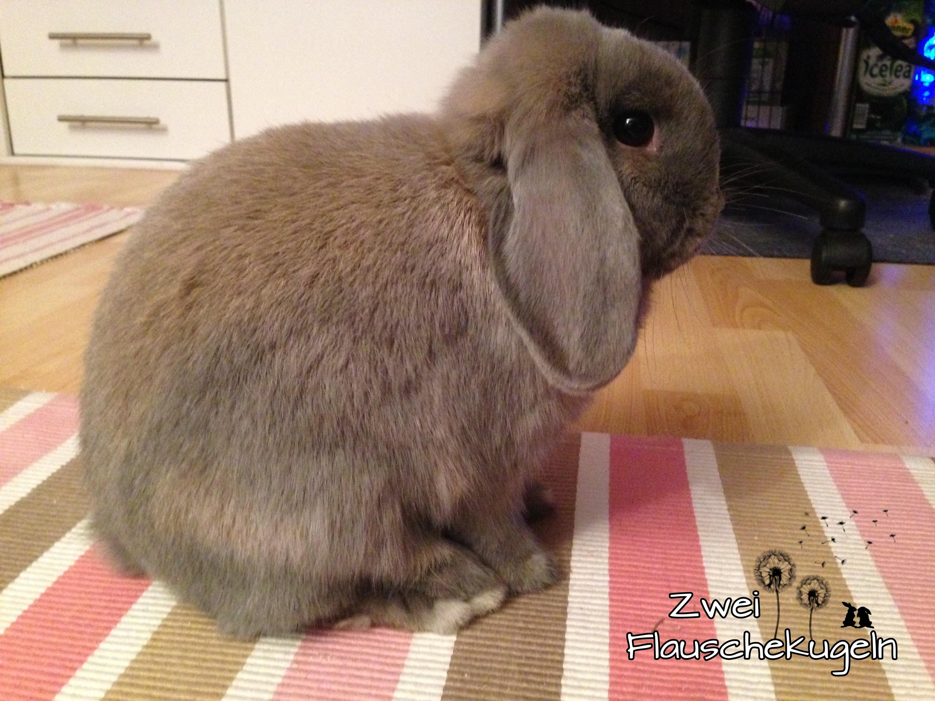 Kaninchensprache 8