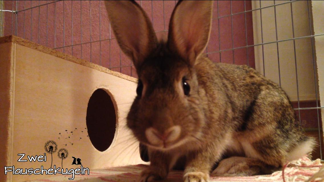 Kaninchensprache 10