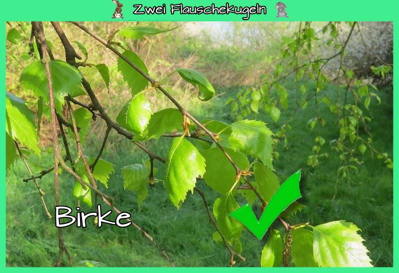 Birke (im Gemisch)