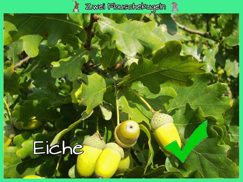 Eiche (im Gemisch)