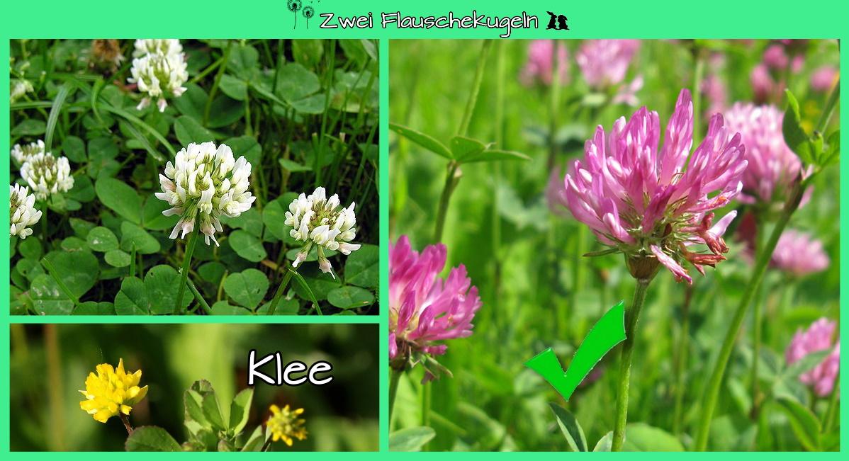 Klee (im Gemisch)