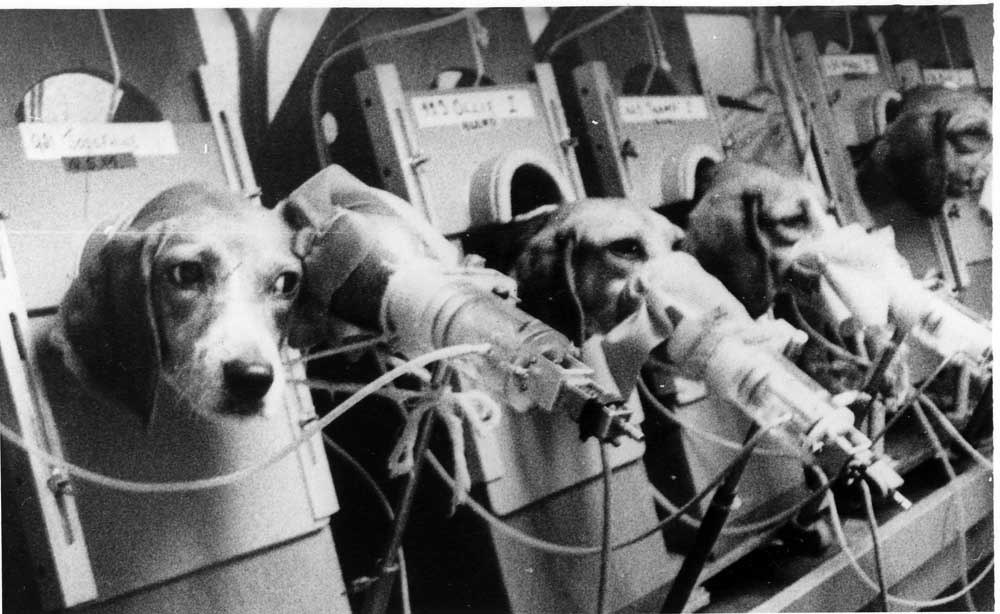 Tierversuche Hunde